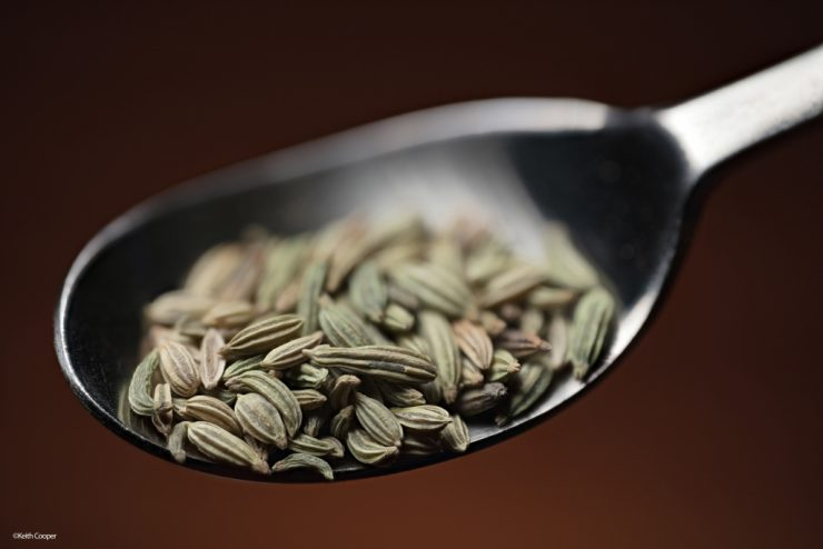 seeds_in_spoon_1_1024x683-740x494.jpg